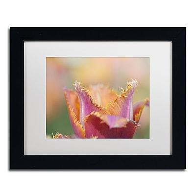 Trademark Fine Art Cora Niele 'Tulip Crispa' 11
