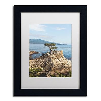 Trademark Fine Art Ariane Moshayedi 'Lone Cypress Tree' 11