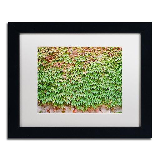 "Trademark Fine Art Ariane Moshayedi 'Ivy Wall' 11"" x 14"" Matted Framed (190836269303)"
