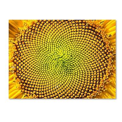 Trademark Fine Art Kurt Shaffer 'Cosmic Patterns in Nature' 14