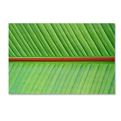 Trademark Fine Art Cora Niele 'Leaf Texture V' 12