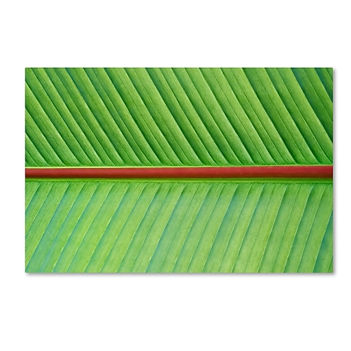"Trademark Fine Art Cora Niele 'Leaf Texture V' 12"" x 19"" Canvas Stretched (190836314706)"