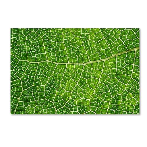 "Trademark Fine Art Cora Niele 'Green Leaf Texture' 12"" x 19"" Canvas Stretched (190836314003)"