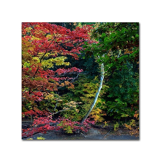 "Trademark Fine Art Kurt Shaffer 'All the Colors of October in Ohio' 14"" x 14"" Canvas Stretched (886511963740)"