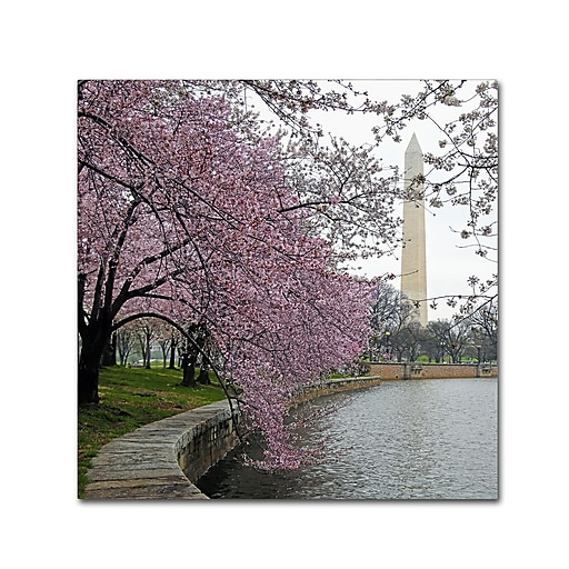 "Trademark Fine Art CATeyes 'Washington Blossoms' 14"" x 14"" Canvas Stretched (190836099740)"