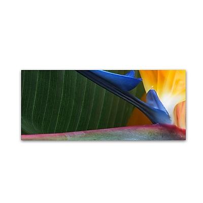 Trademark Fine Art Kurt Shaffer 'Bird of Paradise Abstract' 8