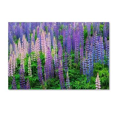 Trademark Fine Art Cora Niele 'Blue Pink Lupine Flower Field' 12