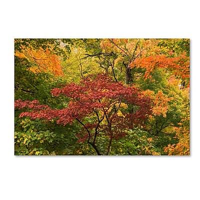 Trademark Fine Art Kurt Shaffer 'Colorful Maples' 12