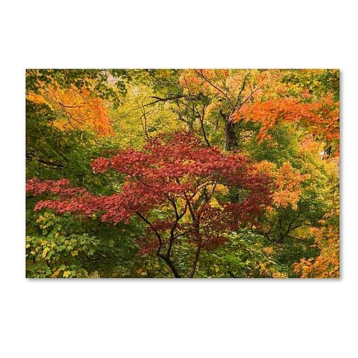 "Trademark Fine Art Kurt Shaffer 'Colorful Maples' 12"" x 19"" Canvas Stretched (886511964426)"