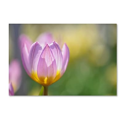 Trademark Fine Art Cora Niele 'Tulip Lilac Wonder'' 12