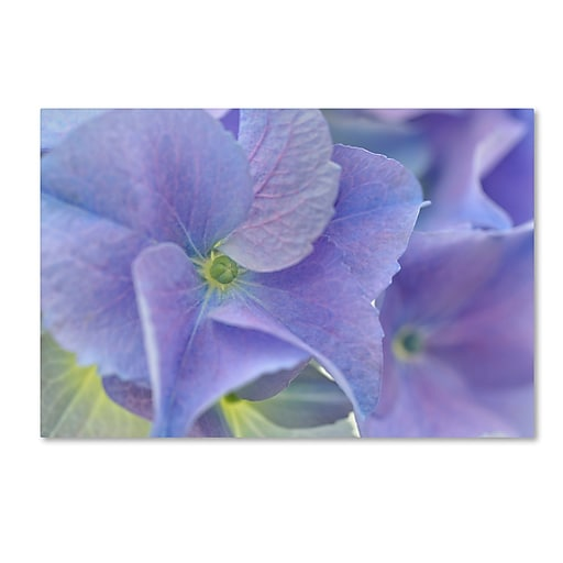 "Trademark Fine Art Cora Niele 'Blue Hortensia' 12"" x 19"" Canvas Stretched (190836256525)"