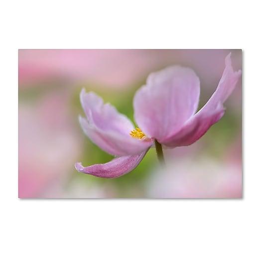 "Trademark Fine Art Cora Niele 'Pink Anemone' 12"" x 19"" Canvas Stretched (190836248643)"