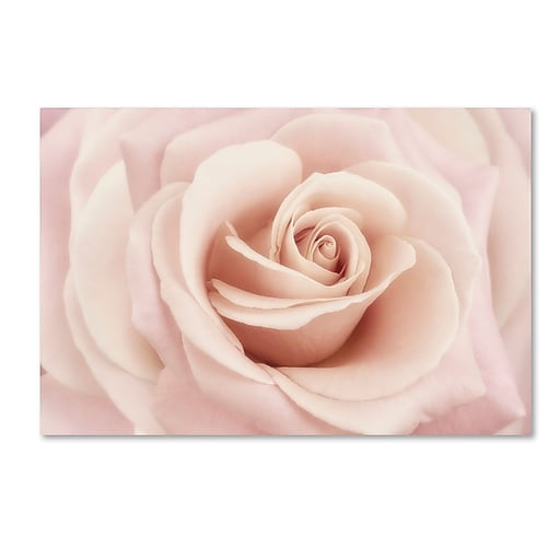 "Trademark Fine Art Cora Niele 'Peach Pink Rose' 12"" x 19"" Canvas Stretched (190836258628)"