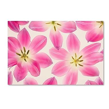 Trademark Fine Art Cora Niele 'Cerise Pink Tulips' 12