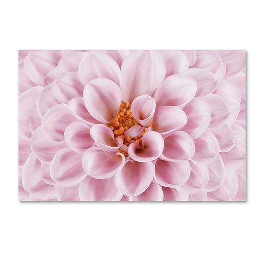 "Trademark Fine Art Cora Niele 'Pink Dahlia' 12"" x 19"" Canvas Stretched (190836306862)"