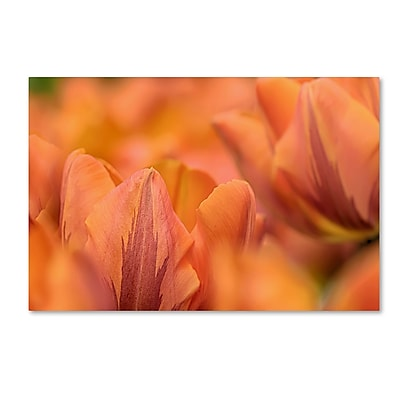 Trademark Fine Art Cora Niele 'Orange Tulips' 12