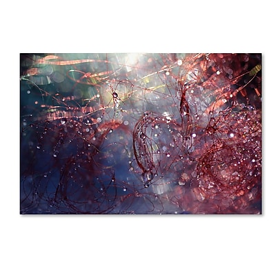 Trademark Fine Art Beata Czyzowska Young 'Adventures of Red' 12