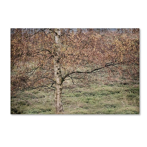 "Trademark Fine Art Cora Niele 'Birch' 12"" x 19"" Canvas Stretched (190836316106)"