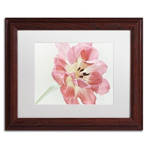 "Trademark Fine Art Cora Niele 'Red Tulip' 11"" x 14"" Matted Framed (190836308927)"