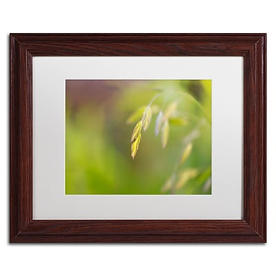 Trademark Fine Art Cora Niele 'Sea Oats Grass' 11
