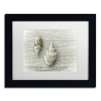 """Trademark Fine Art Cora Niele 'Two Cancellaria Shells' 11"""" x 14"""" Matted Framed (190836258802)"""