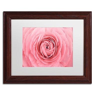 Trademark Fine Art Cora Niele 'Pink Persian Buttercup Flower' 11