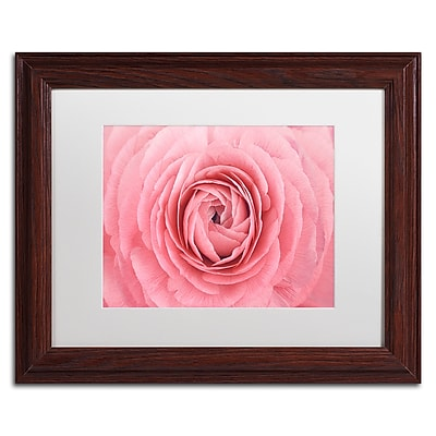 Trademark Fine Art Cora Niele 'Pink Persian Buttercup Flower' 11