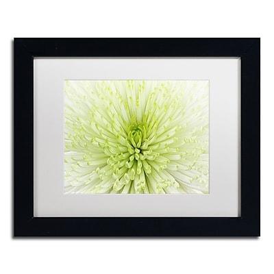 Trademark Fine Art Cora Niele 'Lime Light Spider Mum' 11