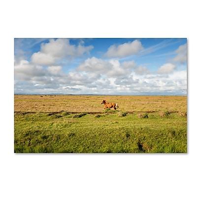 Trademark Fine Art Philippe Sainte-Laudy 'Free as a Horse' 12