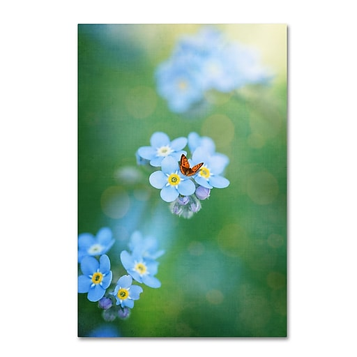 """Trademark Fine Art Philippe Sainte-Laudy 'Forget-Me-Not' 12"""" x 19"""" Canvas Stretched (190836125746)"""