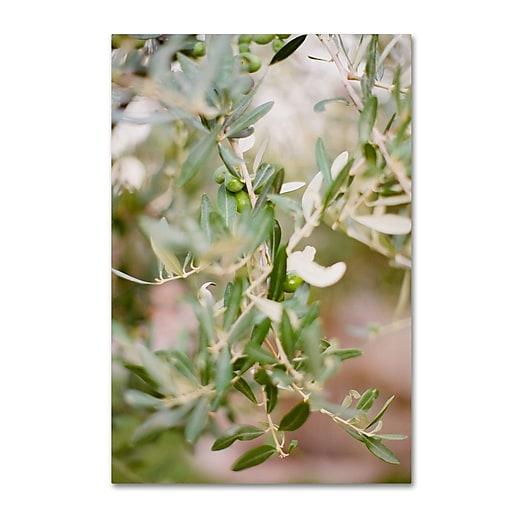 """Trademark Fine Art Ariane Moshayedi 'Olive Branch' 12"""" x 19"""" Canvas Stretched (190836271566)"""