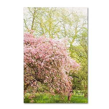 Trademark Fine Art Ariane Moshayedi 'Pink Cherry Blossoms' 12