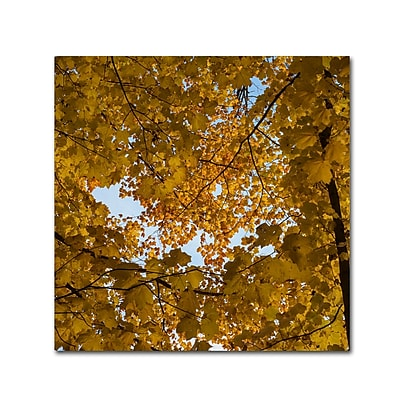 Trademark Fine Art Kurt Shaffer 'Golden Canopy of Autumn' 18