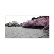 "Trademark Fine Art CATeyes 'Basin Blossoms' 12"" x 24"" Canvas Stretched (190836097913)"