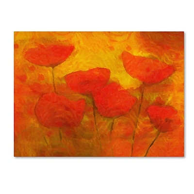 Trademark Fine Art Adam Kadmos 'Poppies' 14