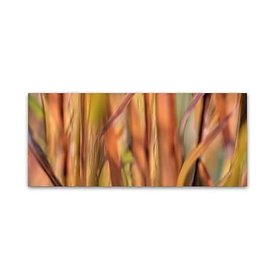Trademark Fine Art Cora Niele 'Autumn Grass Scape' 10