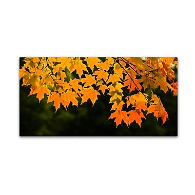 Trademark Fine Art Kurt Shaffer 'October Maple' 10