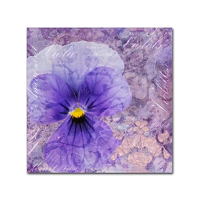 Trademark Fine Art Cora Niele 'Viola - Secret Love' 18