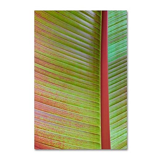 "Trademark Fine Art Cora Niele 'Leaf Texture VI' 12"" x 19"" Canvas Stretched (190836314843)"