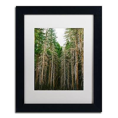 Trademark Fine Art Ariane Moshayedi 'Tree Forest' 11
