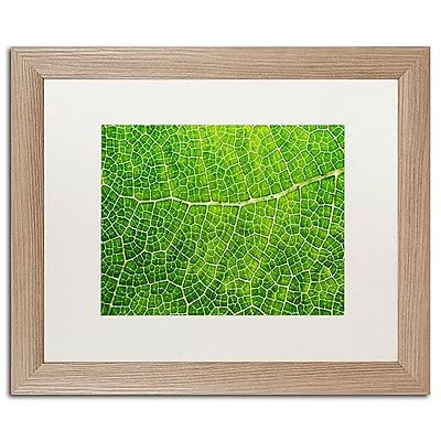 Trademark Fine Art Cora Niele 'Green Leaf Texture' 16