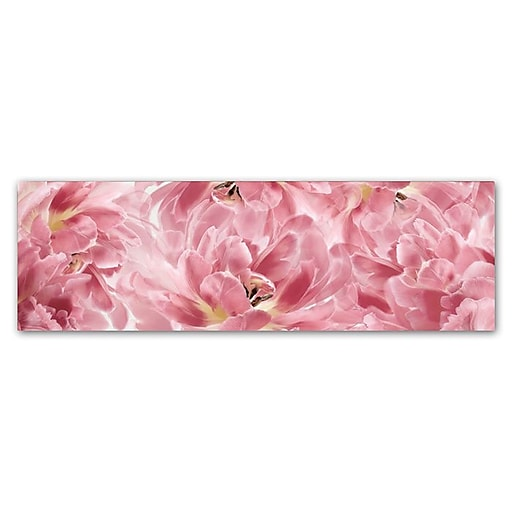"Trademark Fine Art Cora Niele 'Pink Tulips Scape' 6"" x 19"" Canvas Stretched (190836317806)"