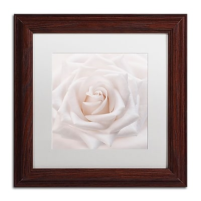 Trademark Fine Art Cora Niele 'Soft White Rose' 11