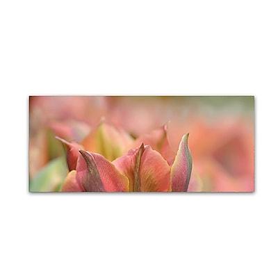 Trademark Fine Art Cora Niele 'Tulip 'Artist' Scape' 20
