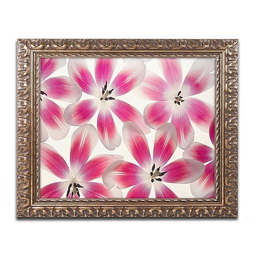 "Trademark Fine Art Cora Niele 'Ruby Red and White Tulips'd Art 16"" x 20"" Ornate Frame (190836309290)"