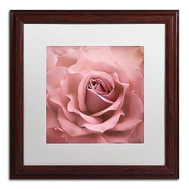 Trademark Fine Art Cora Niele 'Misty Rose Pink Rose' 16