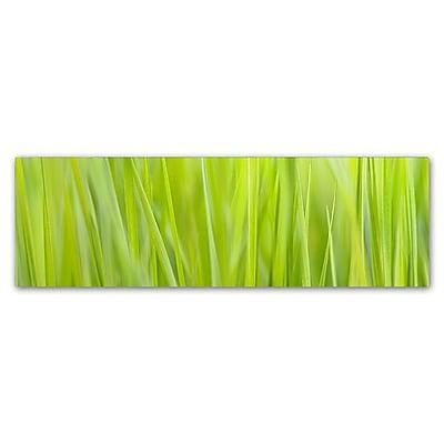 Trademark Fine Art Cora Niele 'Green Grass Scape' 6