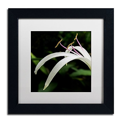 Trademark Fine Art Kurt Shaffer 'Graceful Lily' 11