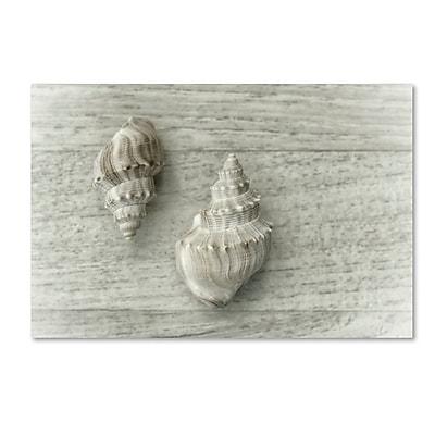 Trademark Fine Art Cora Niele 'Two Cancellaria Shells' 22