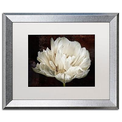 Trademark Fine Art Cora Niele 'Double White Tulip' 16